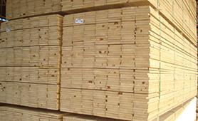 Brazil Pine ACOL(2)