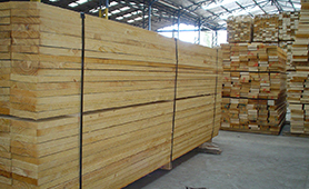 Chile Pine ACOL(3)
