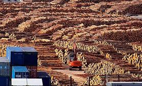 New Zealand Logs